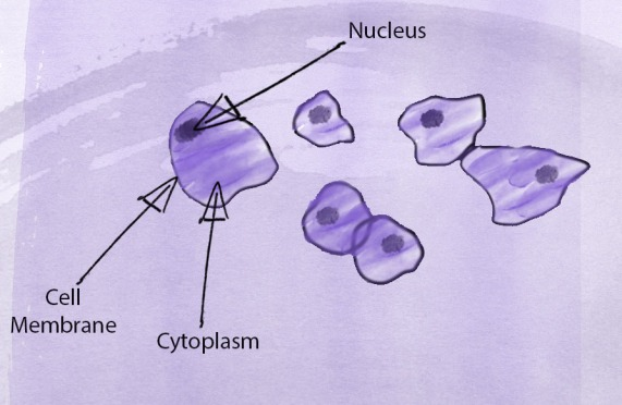 Cheek Cells