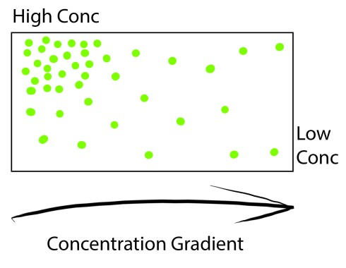 Concentration Gradient.jpg