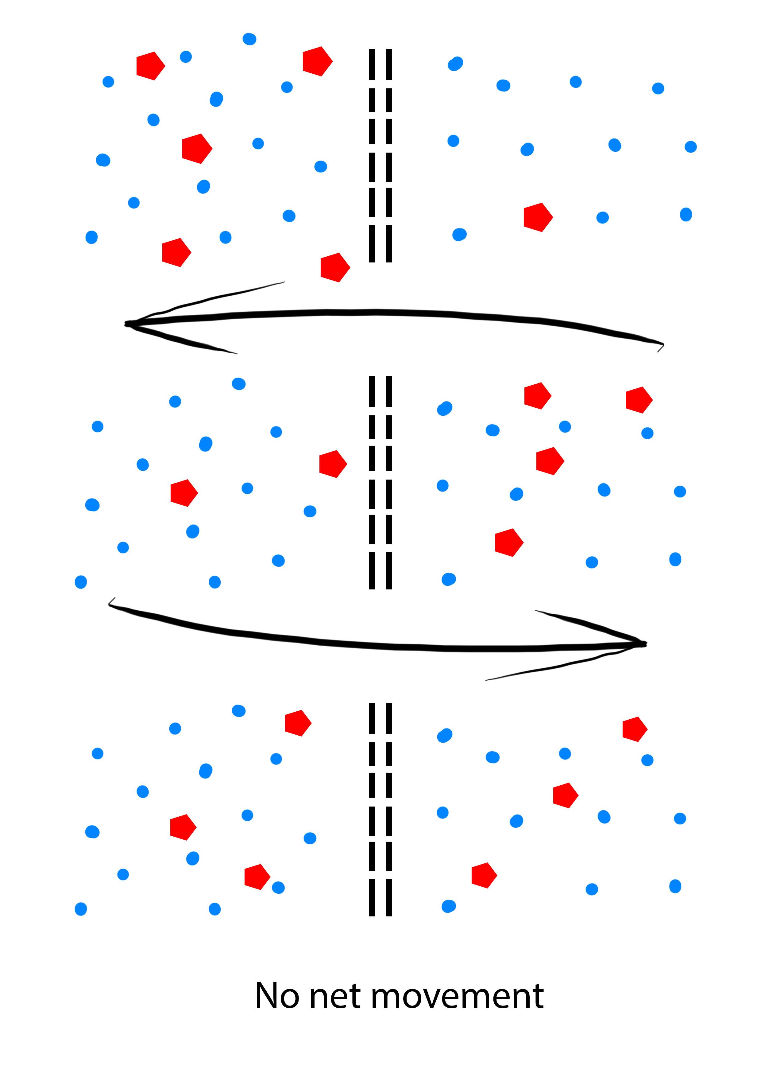 Osmosis 2.jpg